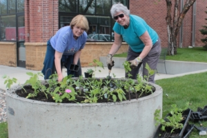 Barb Westman and Gloria Warner planting one of the 17 flower rounds in the city.